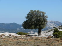 Lonely Tree. Deserted sardinian mountain Supramonte, Italy Royalty Free Stock Image