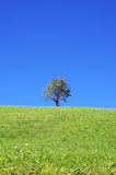 Lonely tree on the dolomites Royalty Free Stock Photo