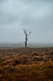 Lonely tree in dramatic countryside Royalty Free Stock Images