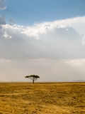 Lonely Tree and dramatic sky, Serengeti, Tanzania Royalty Free Stock Photo