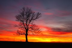 Lonely tree in dramatic sunset, Central Bohemian Upland, Czech R. Silhouette of lonely tree in dramatic sunset, Central Bohemian Upland, Czech Republic stock images
