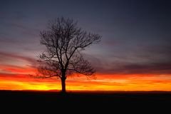 Lonely tree in dramatic sunset, Central Bohemian Upland, Czech R. Silhouette of lonely tree in dramatic sunset, Central Bohemian Upland, Czech Republic stock photos