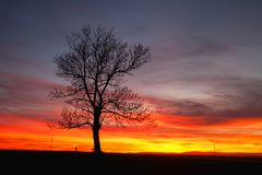 Lonely tree in dramatic sunset, Central Bohemian Upland, Czech Republic. Silhouette of lonely tree in dramatic sunset, Central Bohemian Upland, Czech Republic stock photo