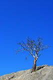 Lonely tree Stock Photo
