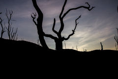The Lonely Tree, Drying and Wait for The Death Stock Image