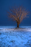 Lonely tree at dusk in winter Stock Photos