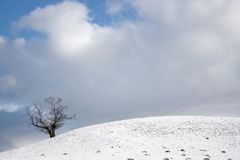 Lonely tree on the edge of a snowy hill Stock Image