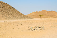 Lonely tree in the egyptian desert Royalty Free Stock Photos