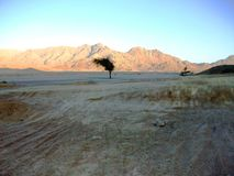 Lonely tree in the egyptian desert stock images
