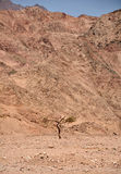 Lonely tree at the Egyptian  mountains Stock Photo