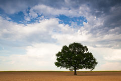 Lonely tree on the empty field Stock Images