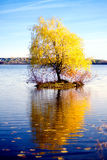 Lonely tree in fall. Fall scenery: a tiny island with a tree in the middle of the lake Royalty Free Stock Photo