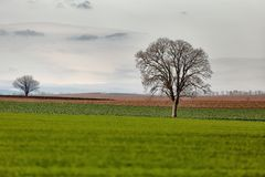 Tree on a field stock images