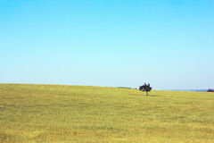 Lonely tree on the field Stock Photography