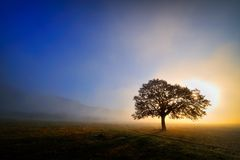 Lonely tree on field Stock Photography