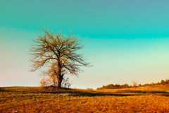 The lonely tree Stock Photos