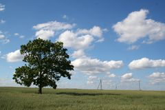 Lonely tree in field. Lonely tree in the field of corns Royalty Free Stock Images