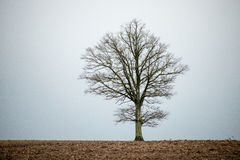 Lonely tree in the field Stock Photos