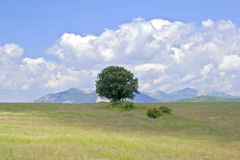 Lonely tree in the field Stock Image