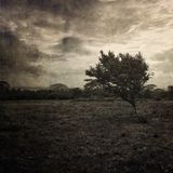 Lonely tree. In a field royalty free stock image