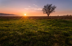 Lonely tree. In the field Royalty Free Stock Images