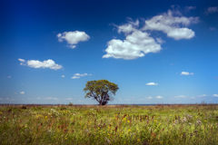 Lonely tree in the field against the blue sky. The cat sulfur who is blissfully basked in the sun with the blinked eyes in a green grass Stock Images