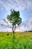 Lonely tree in the field against the sun. HDR a ph Stock Image