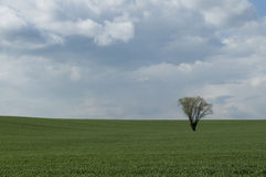Lonely tree on field. Alone tree in the middle of a large field Stock Photos
