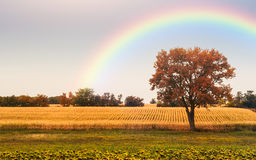 Lonely tree field. Lonely tree on autumn field Royalty Free Stock Photo
