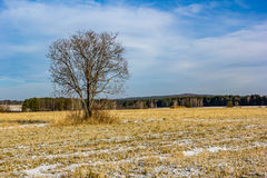 Lonely tree. Tree on field, blue sky and yellow grass Royalty Free Stock Image