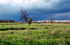 Lonely tree. In the field in Crimea Royalty Free Stock Photo