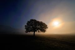 Lonely tree on field at dawn Stock Photography