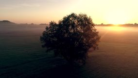 A lonely tree in the field at dawn, in the rays of the rising sun. A lonely tree in a field at dawn, in a fog stock footage