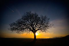 Lonely tree on field at dawn Stock Photo