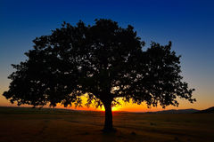 Lonely tree on field at dawn Stock Photos