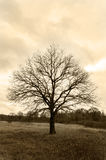 Lonely tree. In the field in the fall Stock Photo