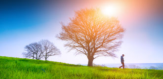 Lonely tree on a field of grass in spring with beautiful bright Stock Image