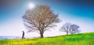 Lonely tree on a field of grass in spring with beautiful bright Stock Photo