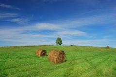 Lonely tree on field with hay bales Royalty Free Stock Images