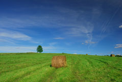 Lonely tree on field with hay bales Royalty Free Stock Photo