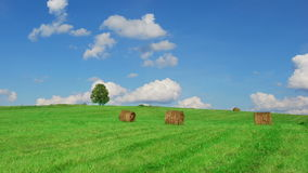 Lonely tree on field with hay bales. Time lapse shot of lonely tree on  field with hay bales stock video