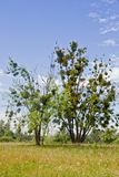 Lonely tree in the field on summer. Lonely tree in the field on a hot summer day Royalty Free Stock Photos