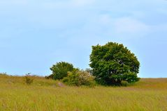 Lonely tree in field Royalty Free Stock Photo