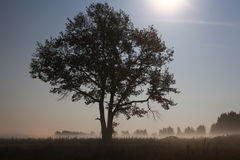 Lonely tree in the field Royalty Free Stock Photography