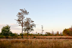 Lonely tree in the field. In late autumn Royalty Free Stock Image