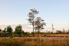 Lonely tree in the field. In late autumn Stock Photography