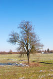 Lonely tree on a field Stock Image