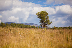 Lonely tree. In a field with mountains in the background Royalty Free Stock Photo