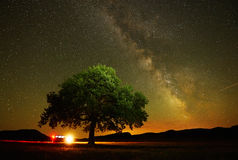 Lonely tree on field by night Royalty Free Stock Photos