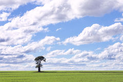 Single tree in green field. One lonely tree in green field against sky and clouds with copy space Stock Photography